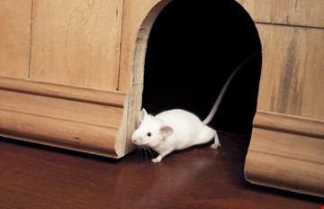 Rodent Control Services – Total Services India- All Types of
